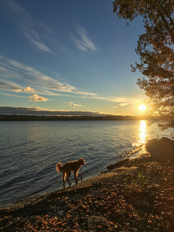 Orange dog at autumn sunrise
